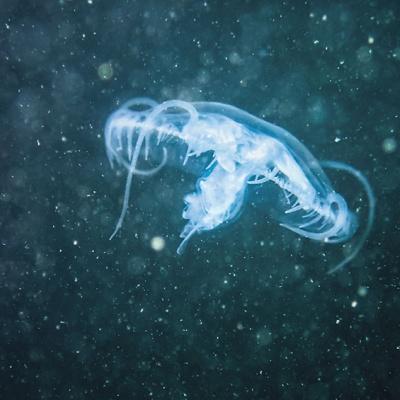 Wie die Qualle in den Bodensee gelangt ist, werden wir nie erfahren. Auch, wie lange schon Polypen im See leben, lässt sich nicht mehr rekonstruieren.